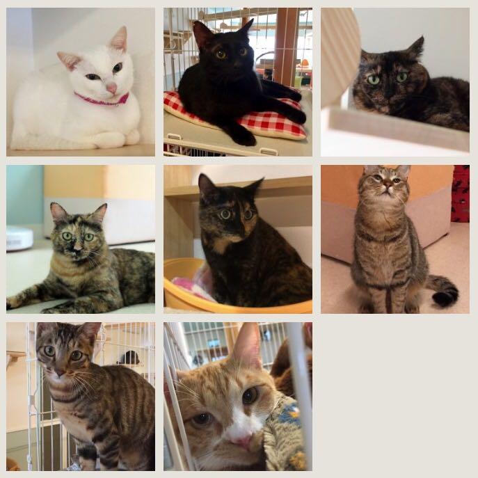 保護猫カフェカーロ/猫スタッフ1
