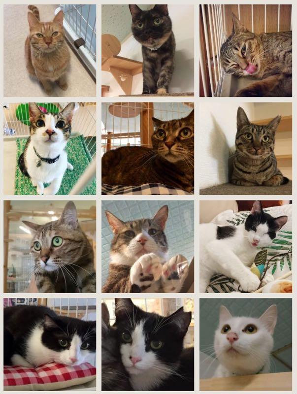 保護猫カフェカーロ/猫スタッフ2