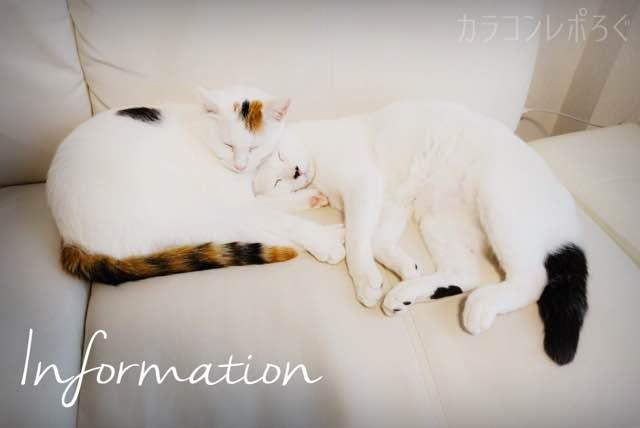 お知らせ/インフォメーションバナー